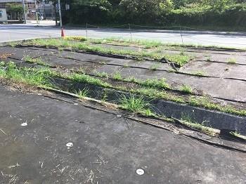 シート 方 除草 敷き